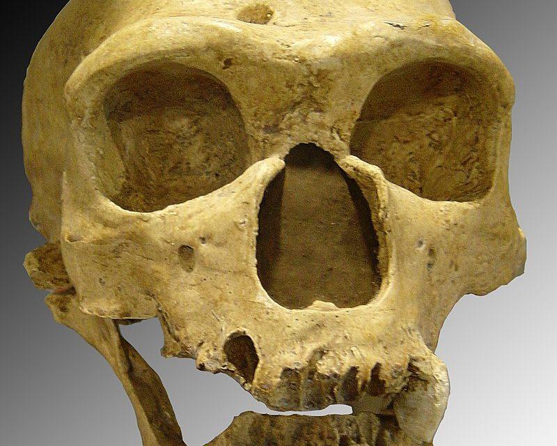 Néandertal et les fake news : histoire d'un « documenteur »