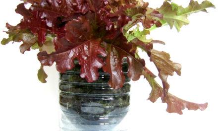 VIDEO : Est-il possible de faire pousser des légumes dans des pots ?
