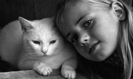 VIDEO : 10 choses que les chats aiment faire