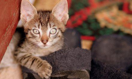 VIDEO : 10 mythes sur les chats qu'il faut arrêter de croire !