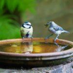 Les oiseaux ont soif !
