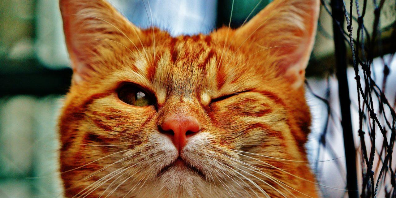 PODCAST : Aimez-vous vraiment les chats ou est-ce un parasite dans votre cerveau qui modifie votre comportement ?