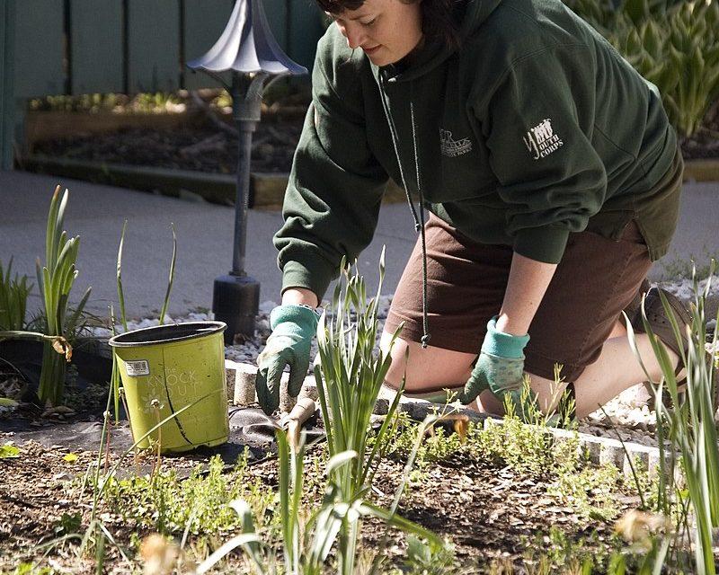 Fin des pesticides pour les particuliers, misez sur la biodiversité