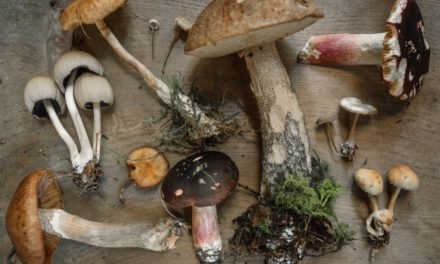 VIDEO : Les champignons comestibles