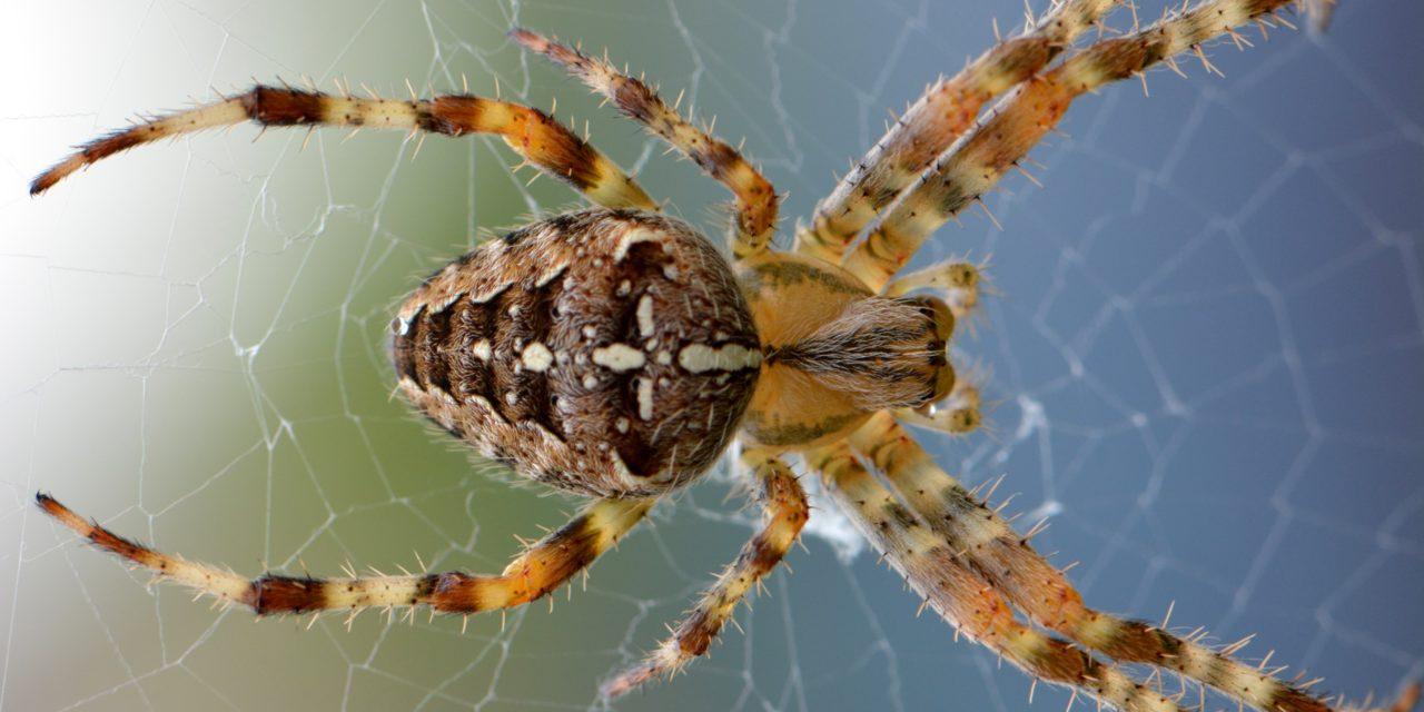 Cessez d'avoir peur des araignées, elles sont fascinantes… et bienveillantes !