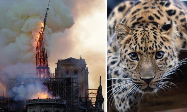 La « cathédrale du vivant » brûle aussi, pourquoi ne faisons-nous rien ?