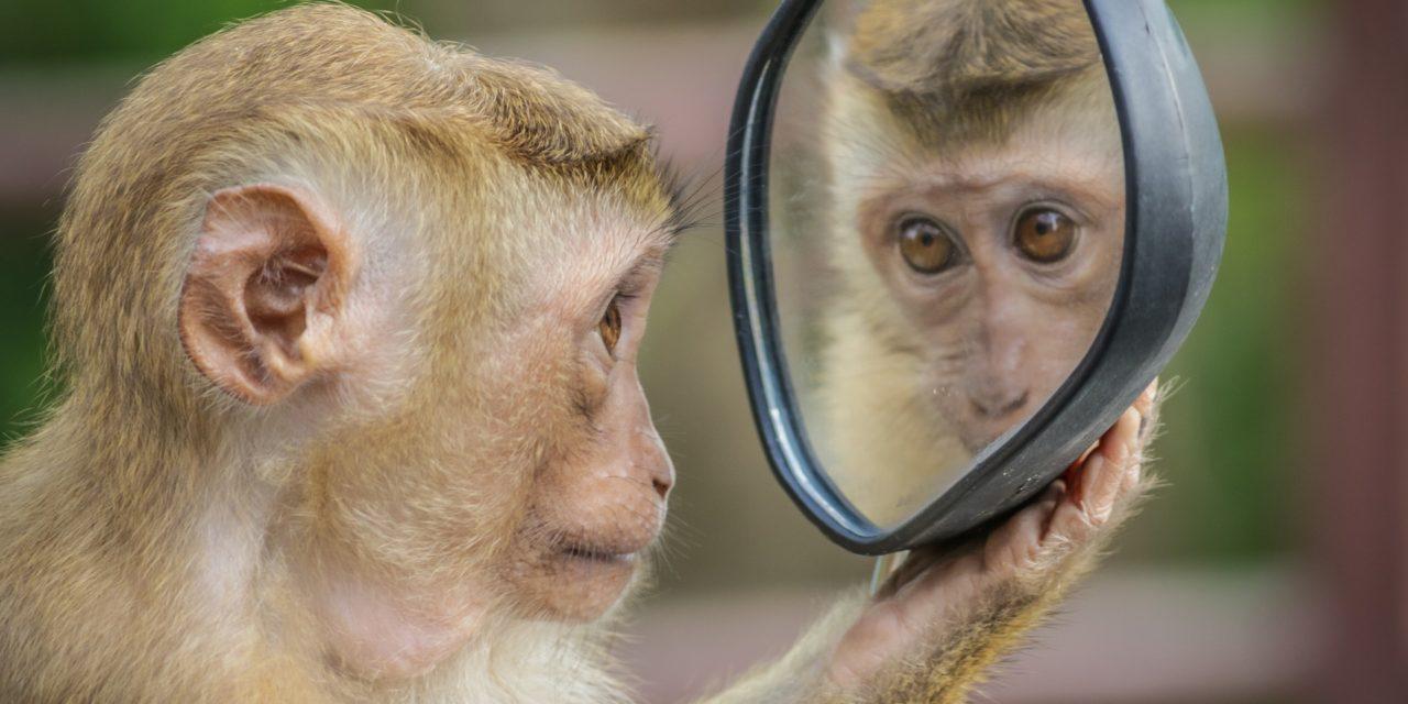 Des juristes proposent de faire de l'animal une personne juridique