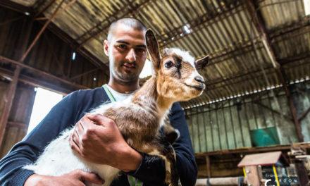 PODCAST : En Belgique des fermes accueillent des personnes en difficultés