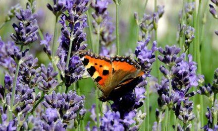 Après le rapport de l'IPBES, trouver des pistes pour sauver la biodiversité