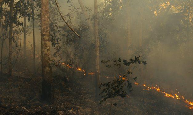 Incendies en Amazonie : pourquoi causent-ils tant de dégâts et comment faire pour les arrêter?