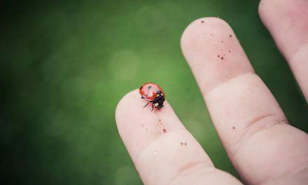 Petit guide pour apprentis naturalistes confinés