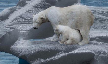 VIDEO : Les (bonnes ?) surprises du changement climatique