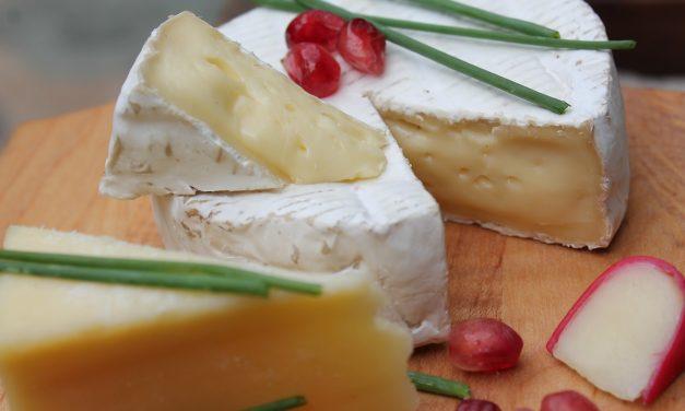 Penicillium camemberti : et l'homme créa le camembert