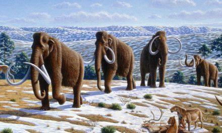Nous avons séquencé l'ADN de mammouths vieux d'un million d'années et révolutionné ce que l'on croyait savoir eux