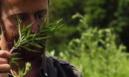 VIDEO:10 plantes sauvages à cueillir cet été