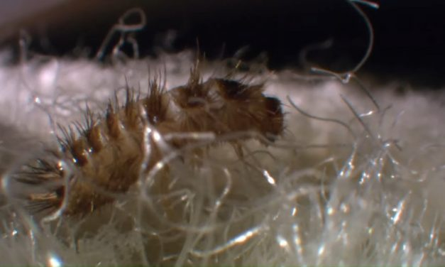 VIDEO:Ces petites bêtes qui peuplent nos maisons (DOCUMENTAIRE ANIMALIER)