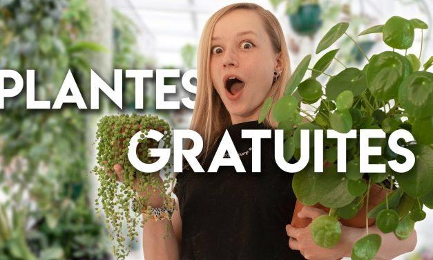 VIDEO:Comment avoir PLEIN de plantes GRATUITEMENT?